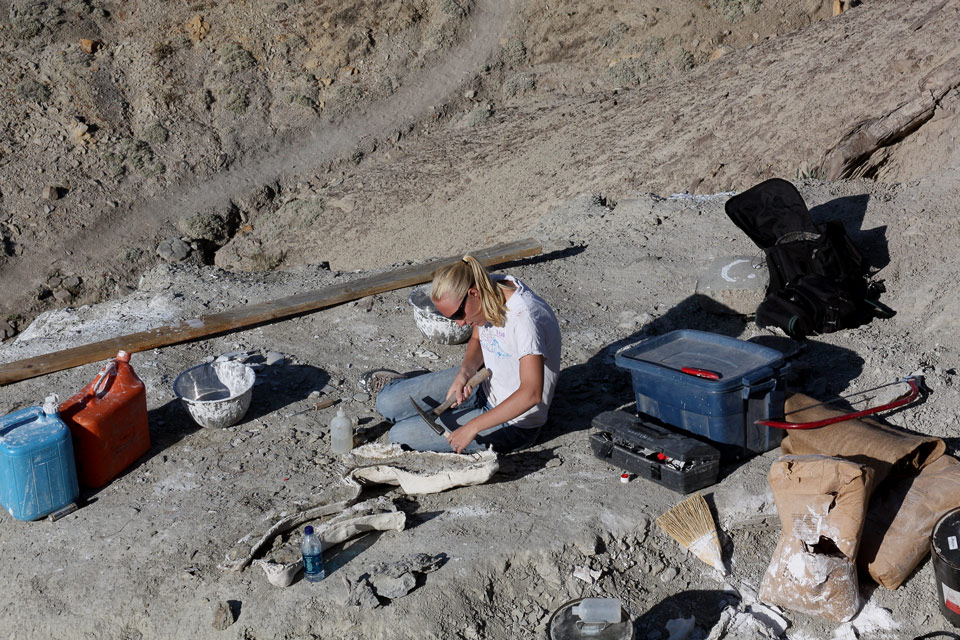 New fossil discoveries show paleontology depends on ...
