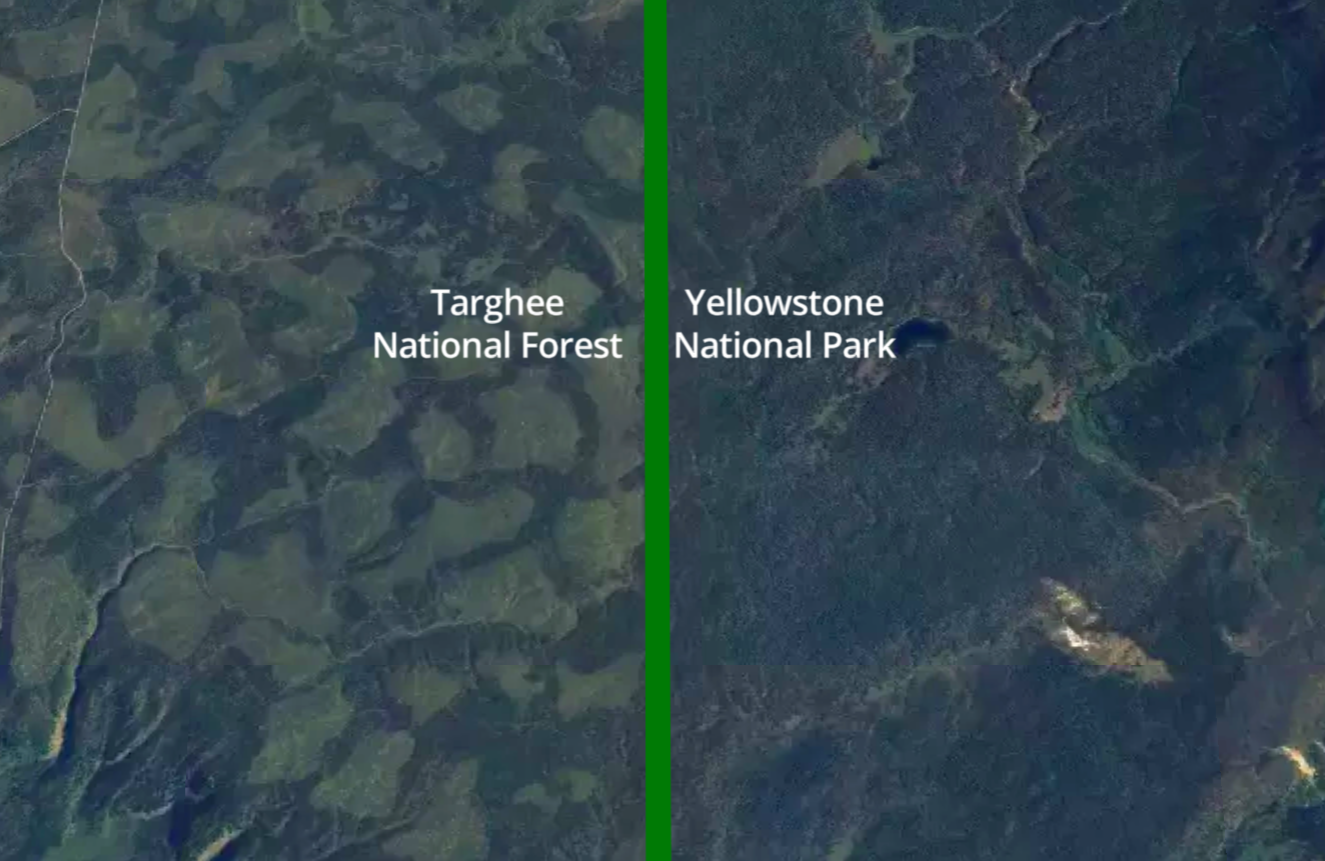Roadless forests and logging impacts near Yellowstone