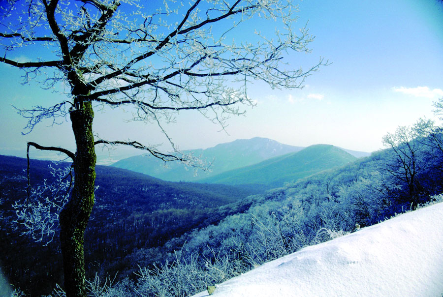 Winter in Shenandoah National Park, VA