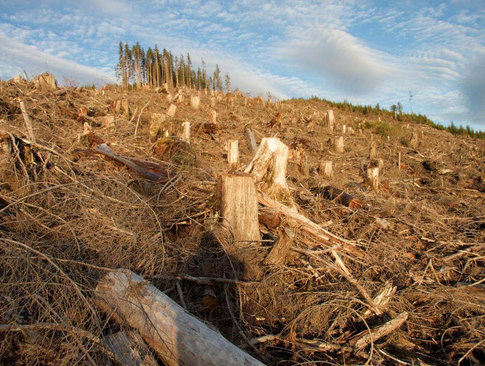 Tree stumps in foreground in Tongass National Forest, Alaska