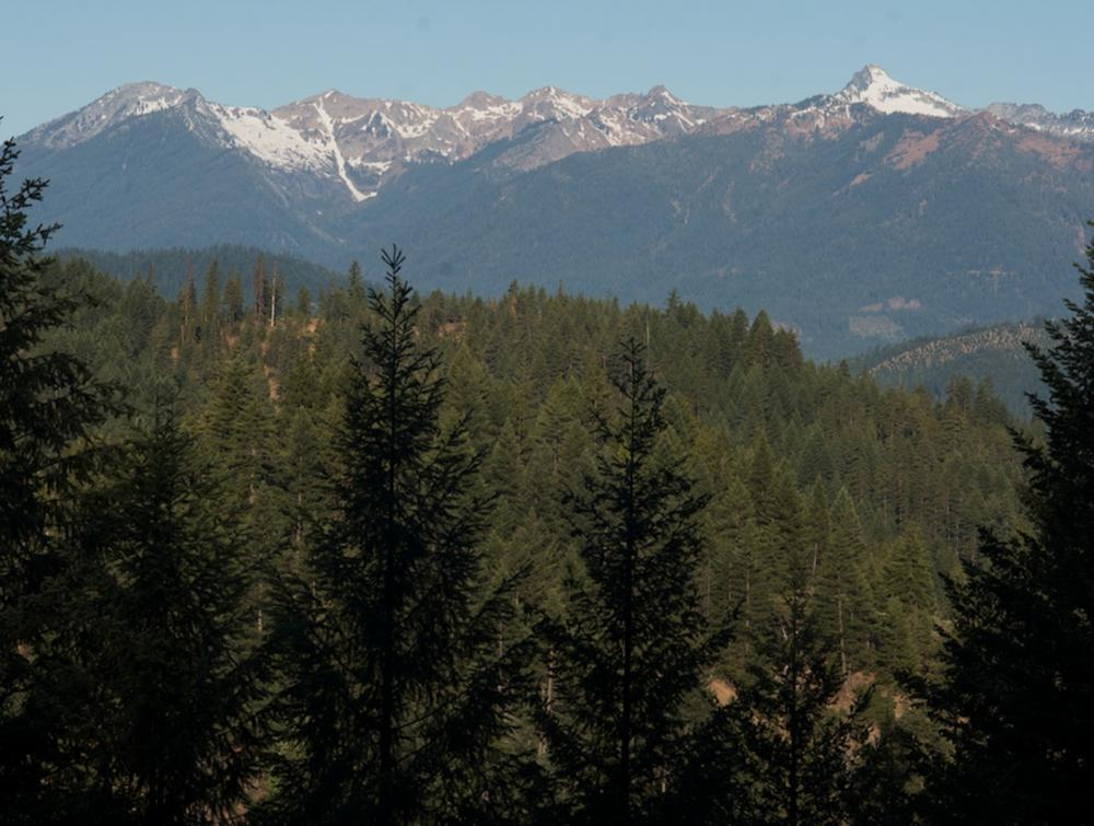 The Shasta-Trinity National Forest, the largest in California, includes five wilderness areas.