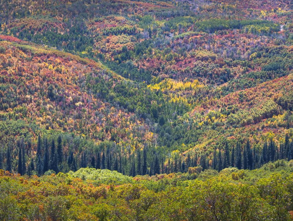 Fall foliage in North Fork Valley, Colorado.
