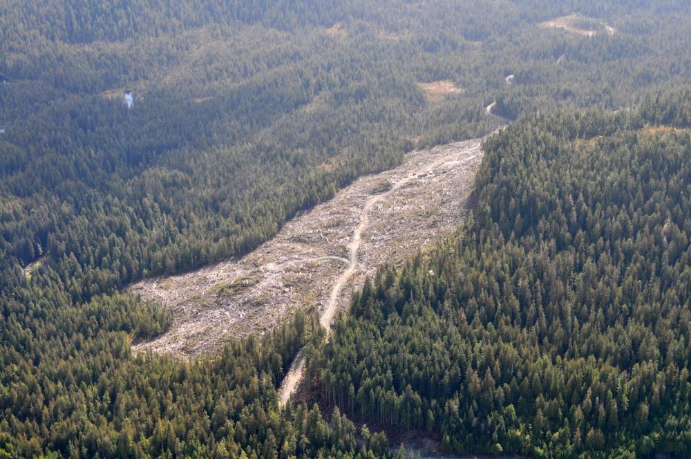 Aerial view of vast stretch of trees with large section that has been logged and cleared near center-frame, Tongass National Forest, Alaska