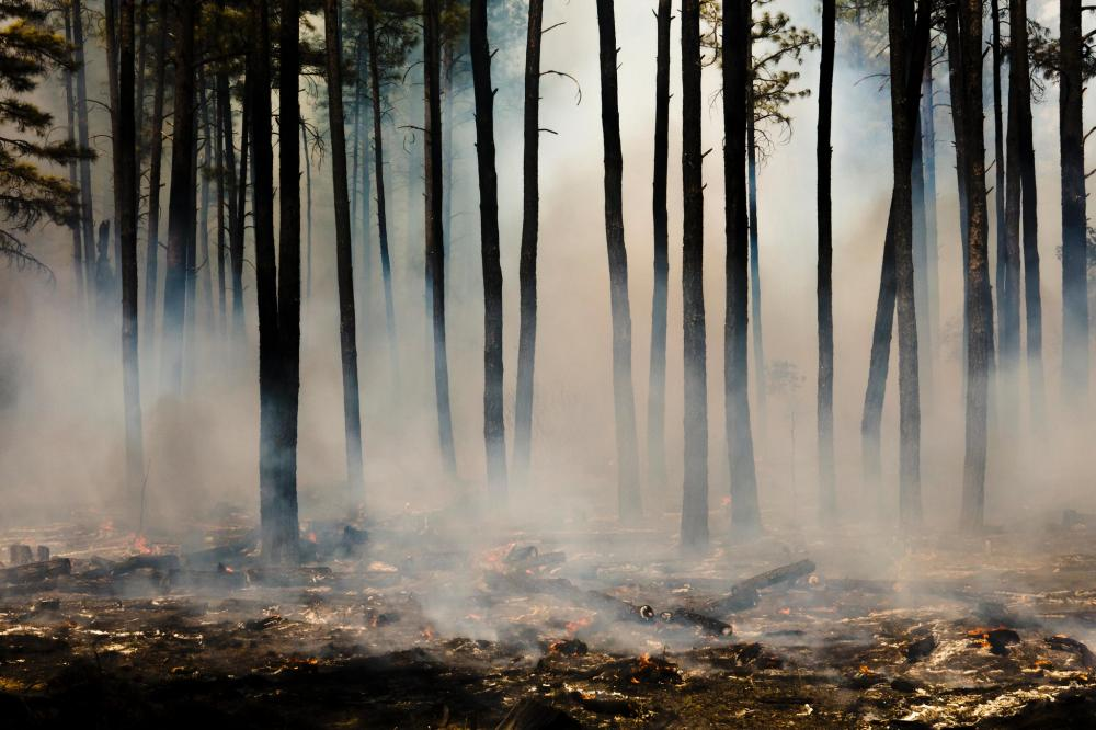 Burned tree trunks with smoke hanging at ground level in forest
