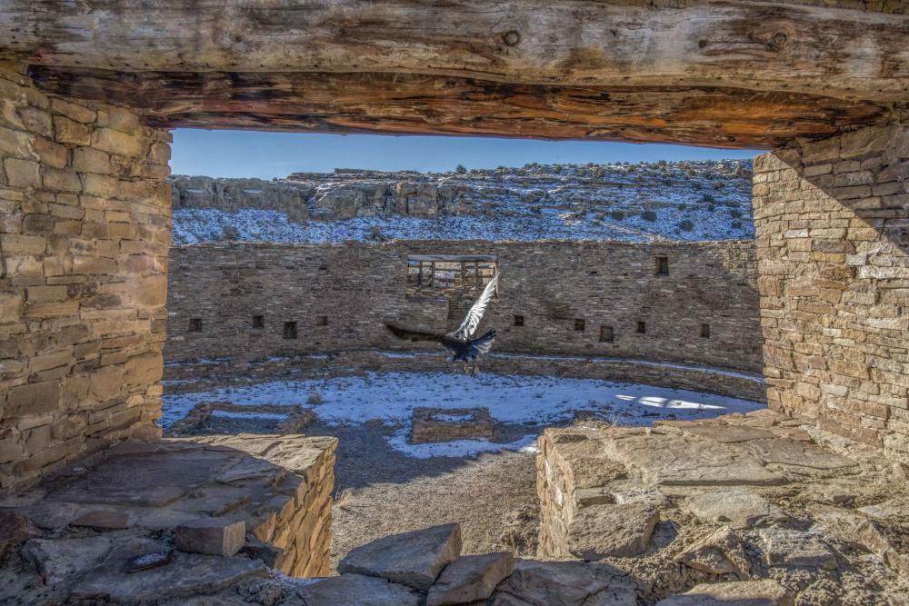 A raven is flying in the middle of the ruin of Casa Rinconada at the Chaco Canyon National Park in New Mexico.