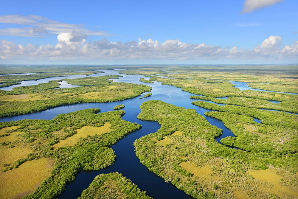 As one of the largest parks in the country, the Everglades are a unique tropical wetland.