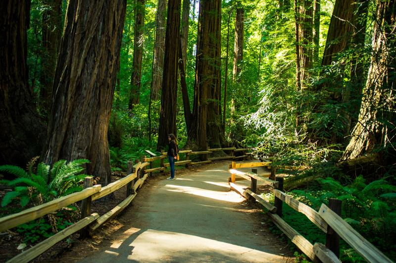 Muir Woods National Monument (California).