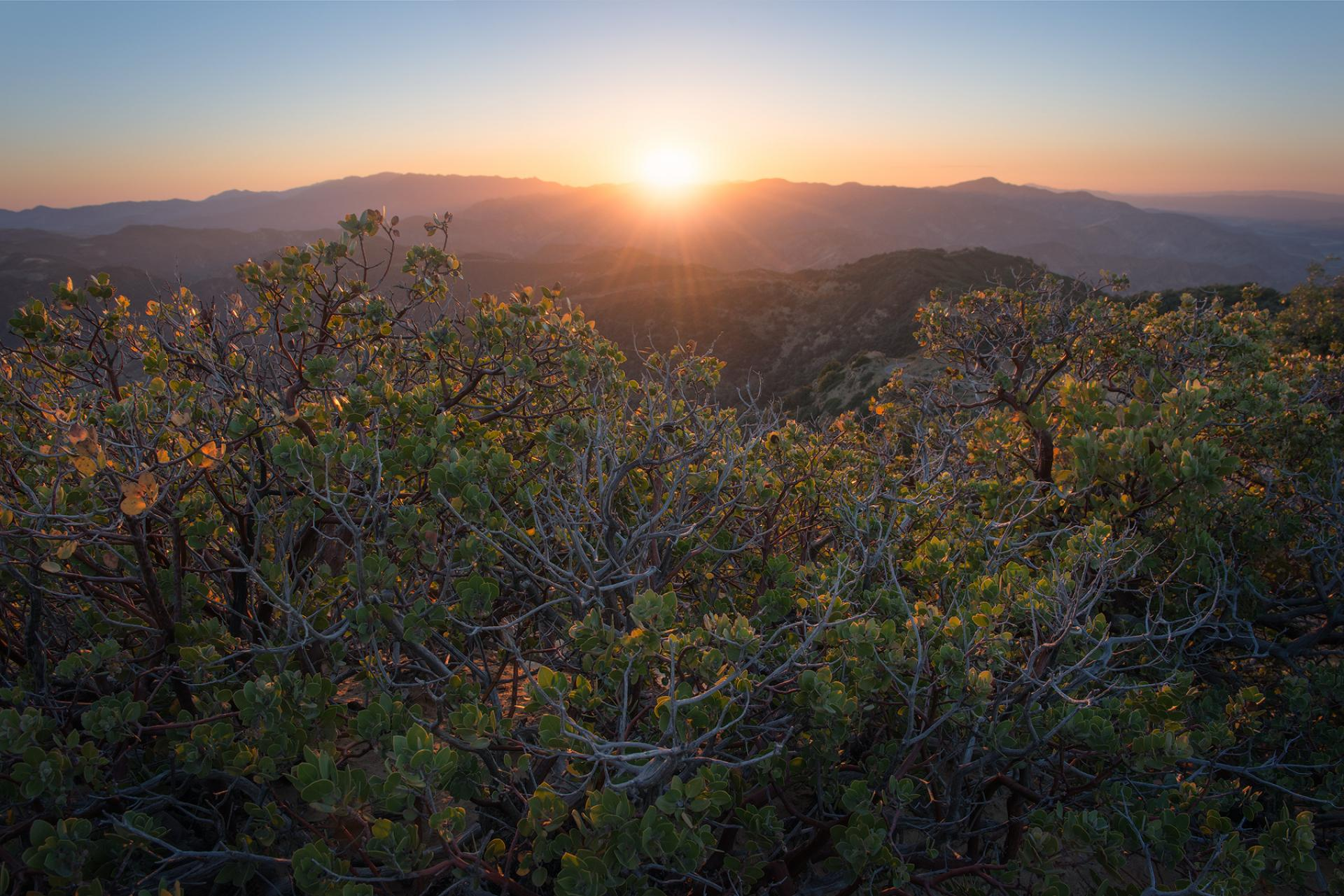 Los Padres National Forest, California.