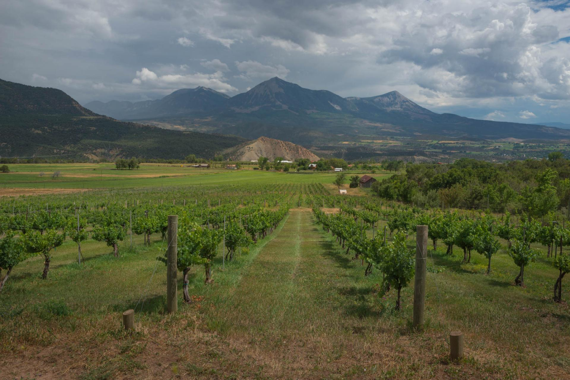 Vineyards in North Fork Valley, Colorado.